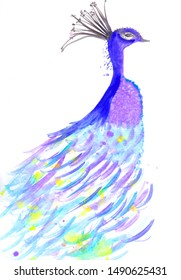 A hand painted watercolor simple illustration of a colorful peacock on a white background with copy space, for your designs and artwork