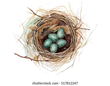 Hand painted watercolor thrush's nest with eggs on white. Aquarelle nature illustration.