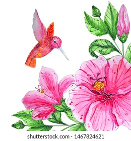 Hand painted watercolor tropical birds. Flying colibri above the hibiscus flowers isolated on white background to create delicate designs for weddings, logotype, greeting cards, mood boards, magazines