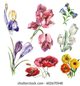hand painting 7 watercolor flowers isolated on white background set for textile, paper, wallpaper