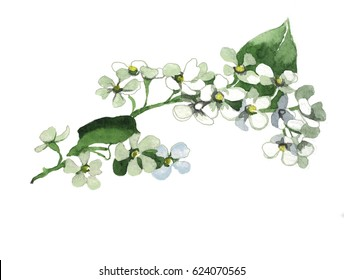 hand painting watercolor bird cherry branch isolated on white background illustration for greeting cards, paper
