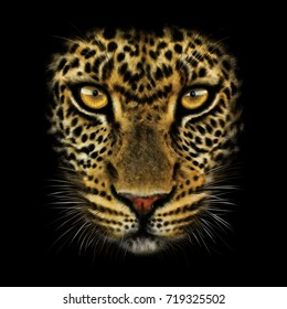 hand-drawing portrait of a leopard on a black background