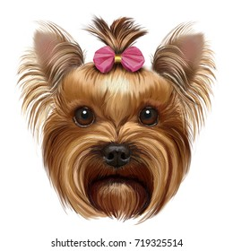 hand-drawing portrait of  a Yorkshire Terrier with pink bow isolated on white background
