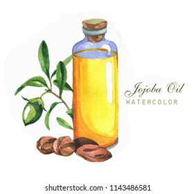 Hand-drawn botanical illustration of the jojoba. Cosmetics and medical plant. Flowers, leaves, branches drawings and oil bottle, isolated on the white background.