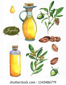 Hand-drawn botanical illustration set of the jojoba. Cosmetics and medical plant. Flowers, leaves, branches drawings and oil bottle, isolated on the white background.