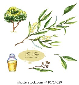 Hand-drawn botanical illustration of the tea tree. Cosmetics and medical plant. Flowers, leaves, branches drawings and oil bottle, isolated on the white background. Melaleuca alternifolia