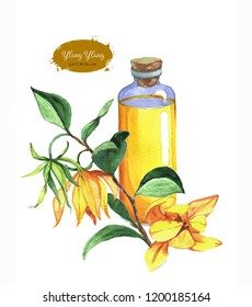 Hand-drawn botanical illustration of the ylang ylang oil. Cosmetics and medical plant. Ylang ylang flowers and oil bottle isolated on the white background.