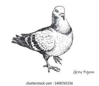 hand-drawn city grey pigeon pen drawing