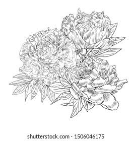 Handdrawn graphic pion summer flower