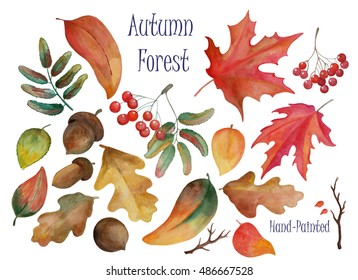 Hand-drawn illustration - autumn forest leaves, acorns and rowan berries by watercolor. Hand-painted clip art. Set of fall theme natural decor elements for wedding design, seasonal card, label, tag