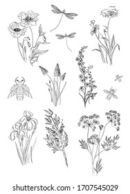 hand-drawn illustration in black and white. Plants and insects. Contour image. Pattern.