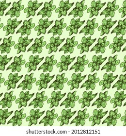 Hand-drawn illustration of mint on a light green background. Background pattern with detailed colorful mint illustration.