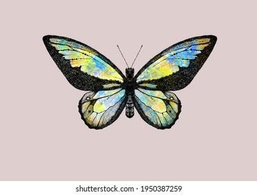 Hand-drawn pointillism butterflies.  JPEG format