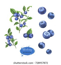 Hand-drawn watercolor illustration of the blueberry on the branch. Food drawing isolated on the white background.