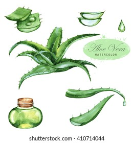 Hand-drawn watercolor illustration of the green aloe vera. Drawings of the sliced leaves, juice in the bottle and branch of the aloe plant, isolated and close up on the white background.