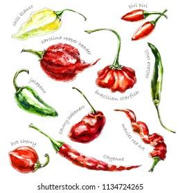 Hand-drawn watercolor illustration of peppers. Chili blanco, jalapeno, carolina reaper header, brazilian starfish, piri piri , habanero, cayenne and hot cherry pepper isolated on the white background.