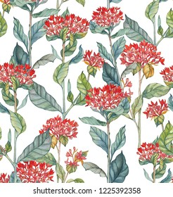Hand-drawn watercolor illustration seamless pattern of the bouvardia flowers. Tender spring exotic flowers. Repeated background