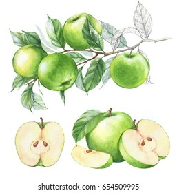 Hand-drawn watercolor illustration set of the green apples fruits. Food drawing isolated on the white background.