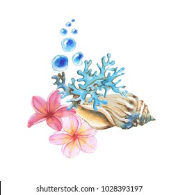 Hand-drawn watercolor illustration of the tropical objects: Plumeria flowers, shell, coral and bubbles isolated on the white background