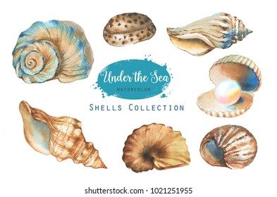 Hand-drawn watercolor illustration of the under the sea. Shells collection