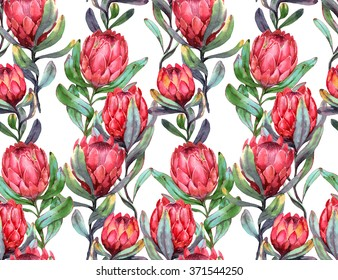 Hand-drawn watercolor seamless tropical pattern with red protea flowers. Colorful exotic summer print with floral elements for the textile and wallpapers.