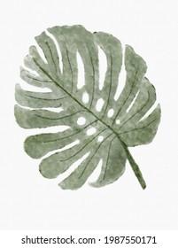 Handmade watercolor monstera deliciosa leaf