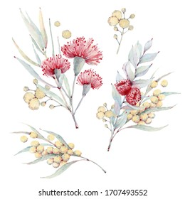Handpainted watercolor australian flowers set. It's perfect for greeting cards, wedding invitation, wedding design, birthday and mothers day cards.