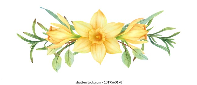 Hand-painted watercolor daffodils combination on white background