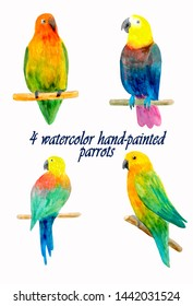 Hand-painted watercolor parrots isolated. Ideal for postcards, scrapbooking and postcards. Isolated parrot birds.