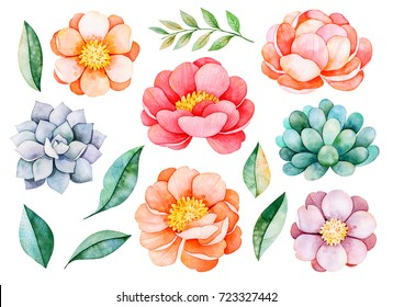 Handpainted watercolor peonies, flowers, succulents,branch and leaves.14 lovely clipart isolated.Can be used for your project,greeting cards,wedding,Birthday cards,bouquets,wreaths,invitations,logos.