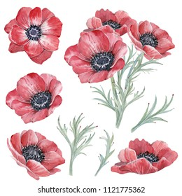 Handpainted watercolor red anemone flowers set in vintage style. It's perfect for greeting cards, wedding invitation, wedding design, birthday cards. Watercolor botanical illustration.