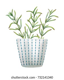Hand-painted watercolor rosemary in a ceramic pot on white background. Botanical illustration of culinary herbs