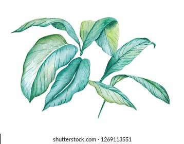 Hand-painted watercolor set. Poster with green  leaves