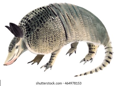 Handwork watercolor illustration of Armadillo in white background