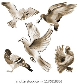 Handwork watercolor illustration of birds doves in white background. Sepia
