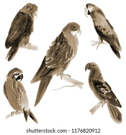 Handwork watercolor illustration of birds parrots in white background. Sepia
