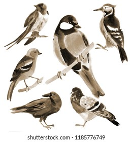 Handwork watercolor illustration of birds in white background. Sepia