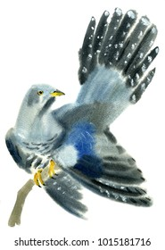 Handwork watercolor illustration of a cuckoo bird in white background.