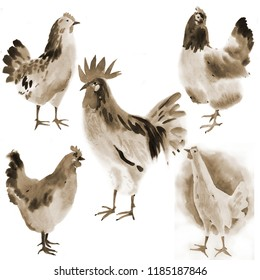 Handwork watercolor illustration of farm birds in white background. Sepia