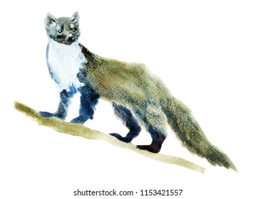 Handwork watercolor illustration of a ferret