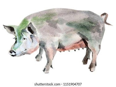 Handwork watercolor illustration of a pig