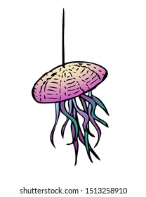 Hanging Air Plant in a Sea Urchin Decor - Illustration