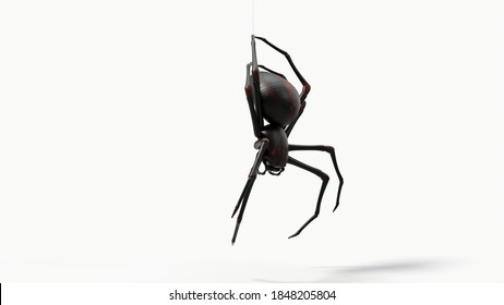 hanging black spider. with red skin details. suitable for horror, halloween, arachnid and insect themes. 3d illustration with white background.