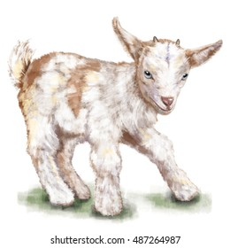 Happy small goat on white. Watercolor animal illustration.