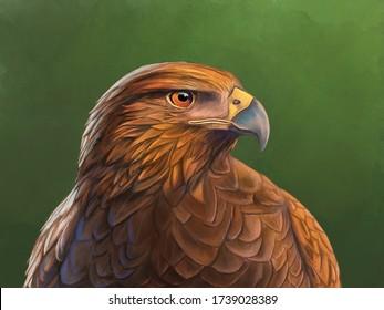 Harris hawk portrait with dramatic lighting. Digital painting.
