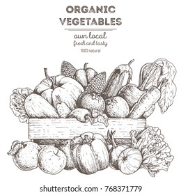 Harvest of vegetables in the basket. Hand drawn illustration. Engraved style