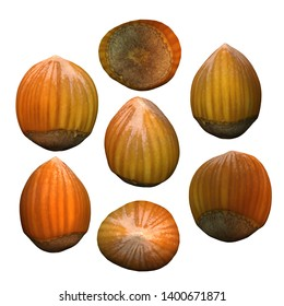 Hazelnut white background multiple angles 3d render