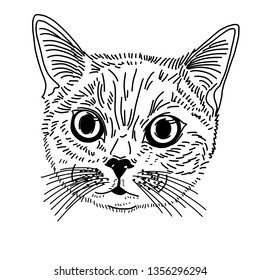 The head of a cat or cat with large open eyes and mustache. Looks to the side. The illustration is drawn by one line.