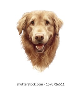 Head of a cute Golden Labrador Retriever isolated on white background. Realistic portrait of Guide dog. Animal art collection: Dog. Hand Painted Illustration of Pets. Good for print on T-shirt.