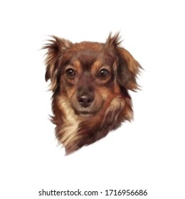 Head of Cute toy terrier isolated on white background. Portrait of a brown lap dog. Hand painted illustration of Pets. Animal art collection: Dogs. Good for print T-shirt, pillow. Design template